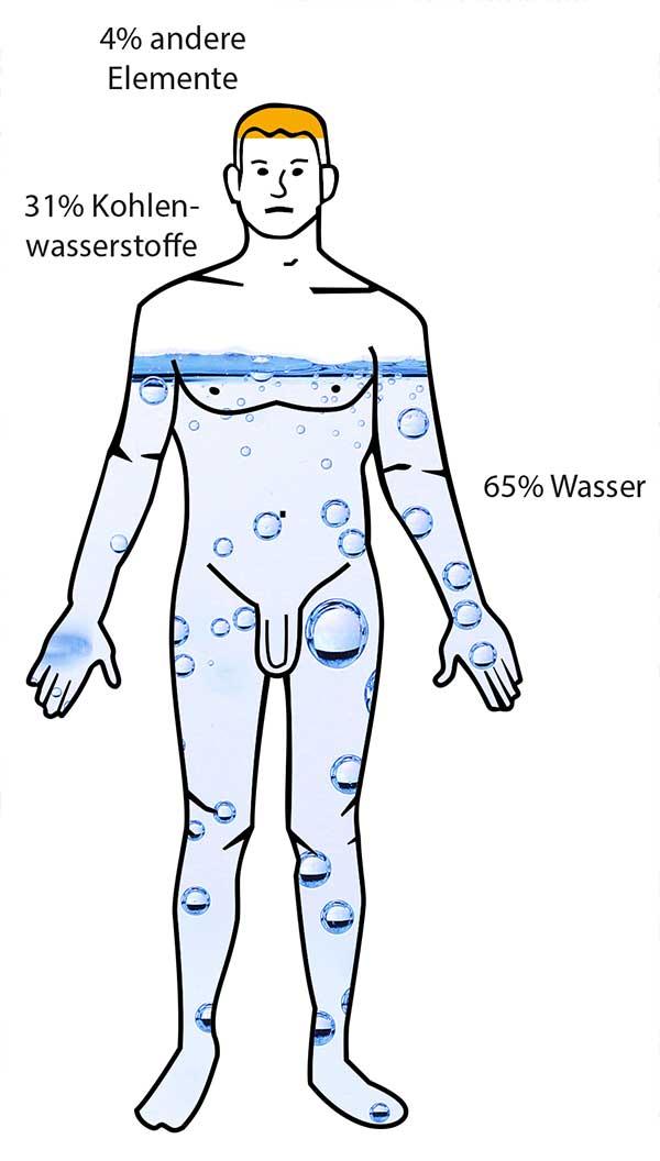 Prozentuale Zusammensetzung des Körpers aus Wasser, Kohlenwasserstoffen und sonstigen Molekülen