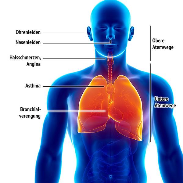 Atemwege mit Anwendungsfällen für Schungit-Wasser