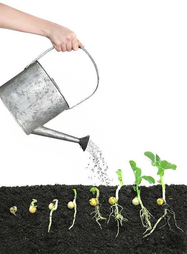 Keimstadien eines Samens