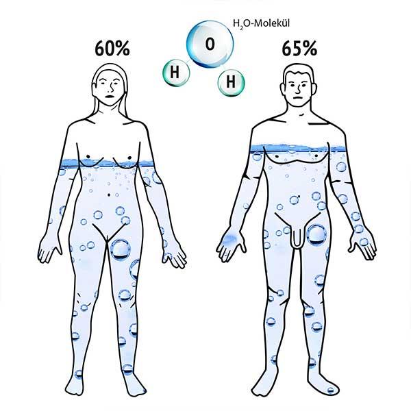 Wasseranteil am menschlichen Körper