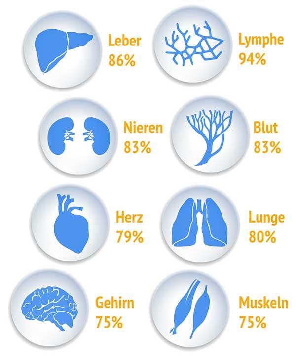 Wasseranteil ausgewählter Organe des menschlichen Körpers